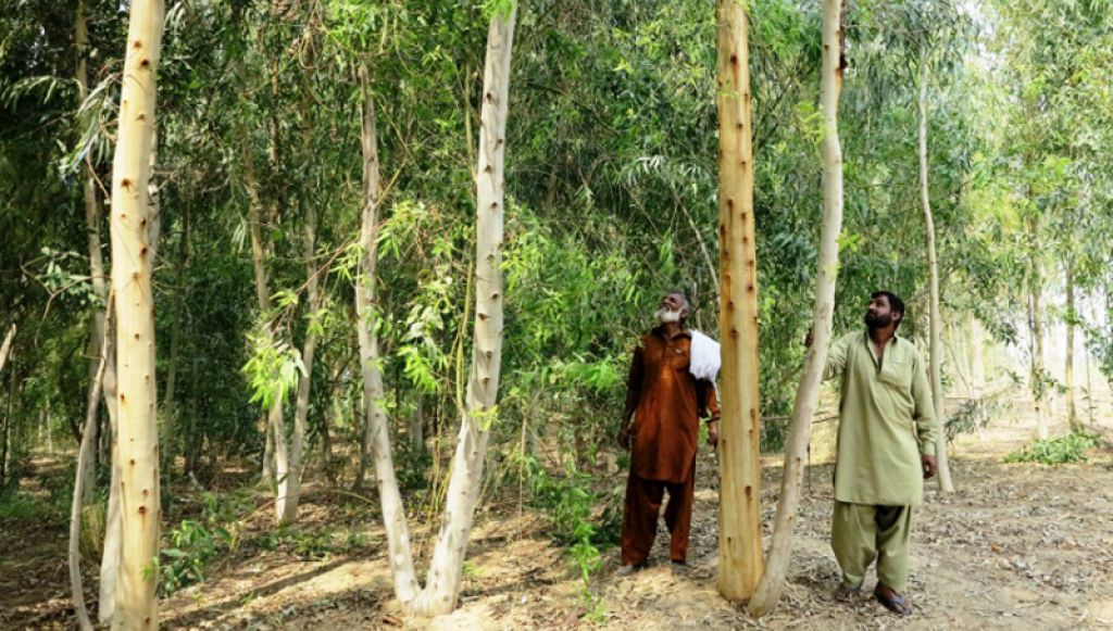 Trees Provide Income And Preserve Land In Pakistan Asian